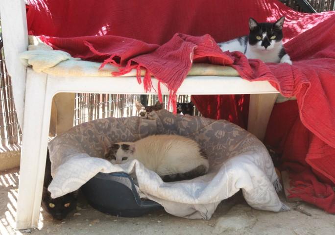 chiens et chats attendent une famille la spa de brignoles brignoles var matin. Black Bedroom Furniture Sets. Home Design Ideas