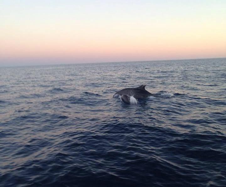 dauphins mer