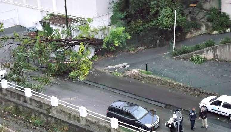 Photo un arbre se couche sur le boulevard de la madeleine for Garage boulevard de la madeleine nice