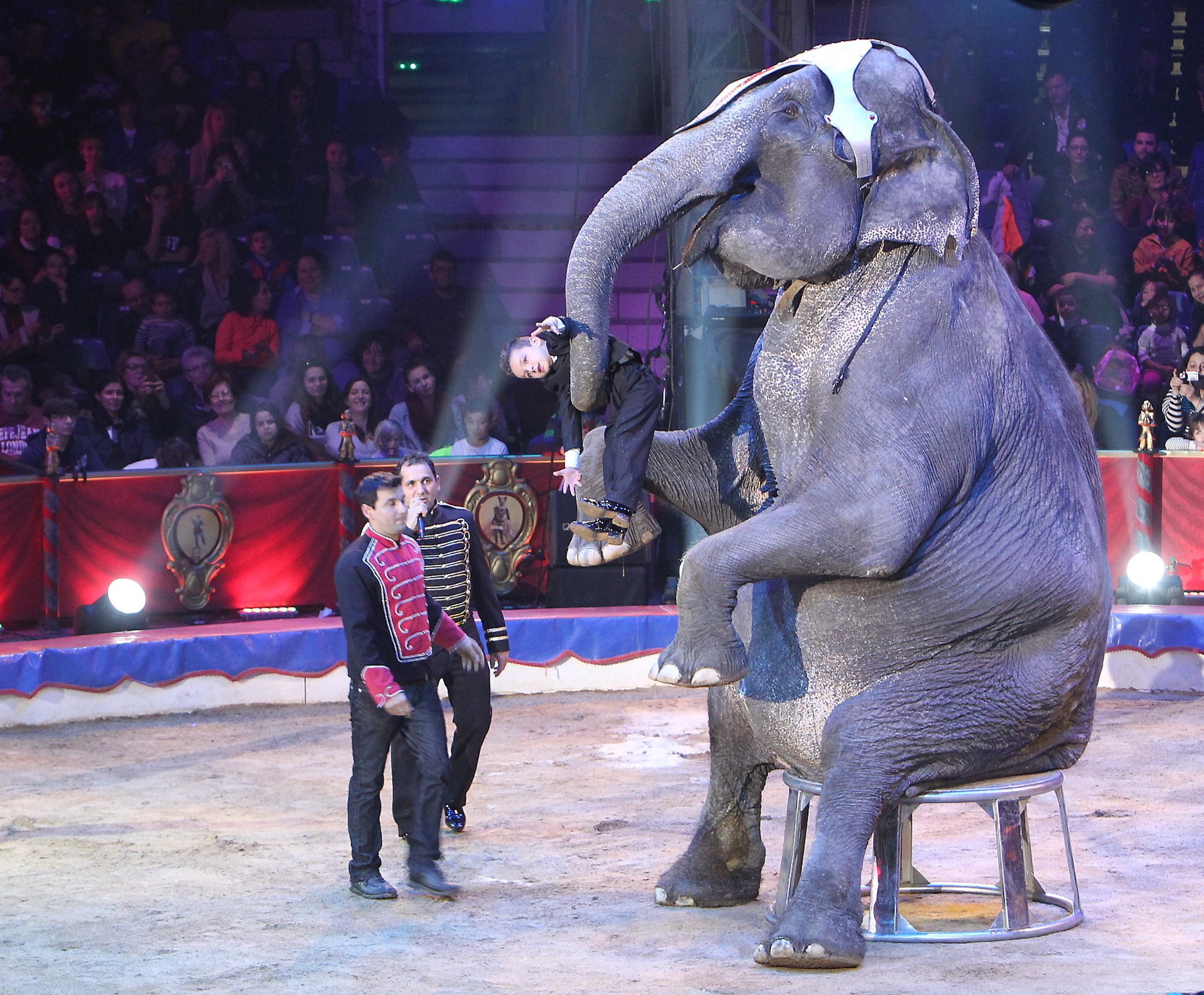 Un dompteur d'éléphant