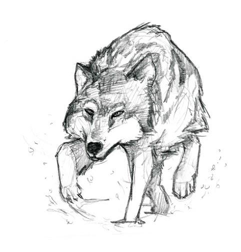 le plus impressionnant chien loup
